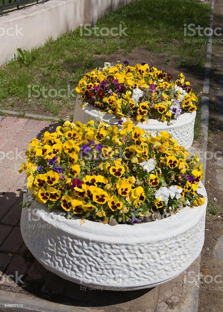 bedflowers stock photo