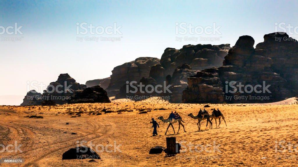 Bedoin Camels Yellow Sand Valley of Moon Wadi Rum Jordan stock photo