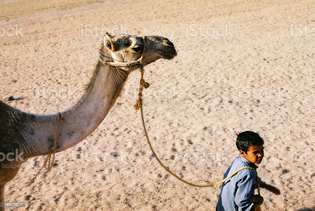 Bedouin child with camel royalty-free stock photo