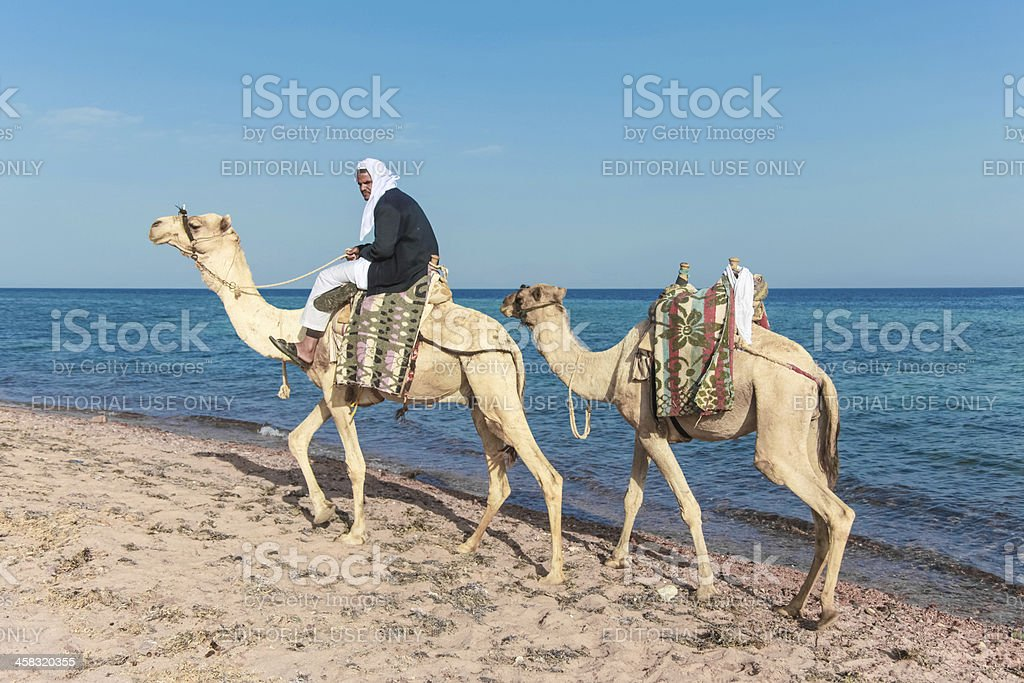 Bedouin on a camel stock photo
