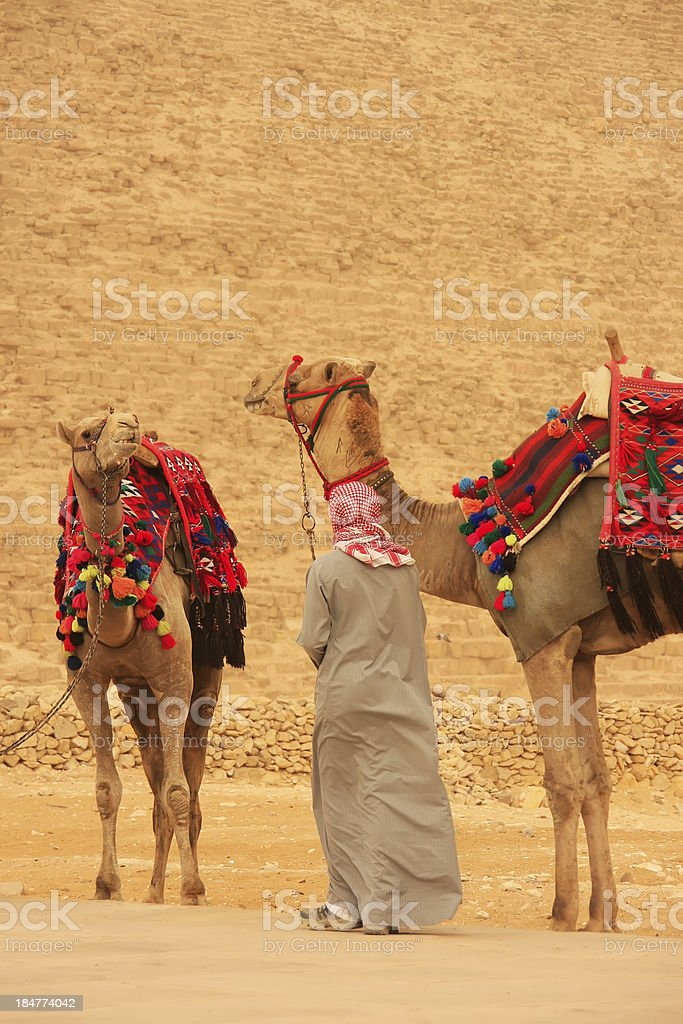 Bedouin with camels near Pyramid of Khafre, Cairo royalty-free stock photo