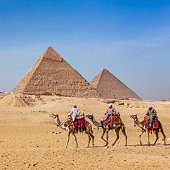 Bedouins riding on camels, pyramids on the background, Giza, Egypt.