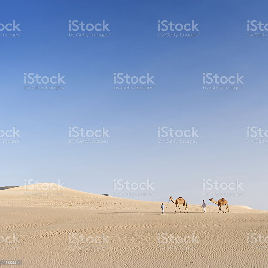 Bedouins with camels on Western Sahara Desert in Africa stock photo