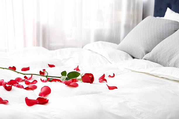 bedroom with single rose and petals on bed, copy space - enkele roos stockfoto's en -beelden