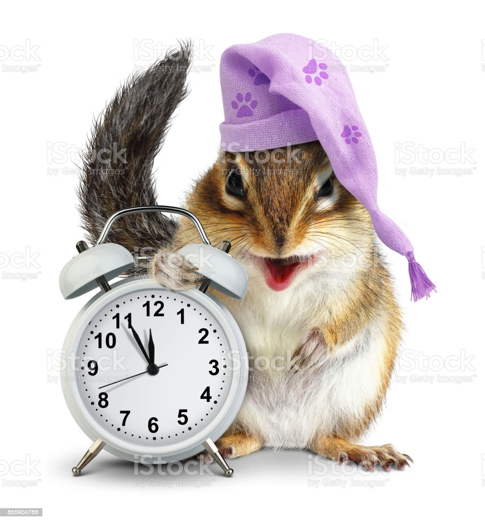bedtime concept, Funny animal chipmunk with clock and sleeping cap stock photo