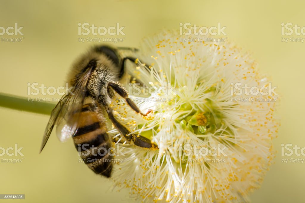 Bee and Blossom stock photo