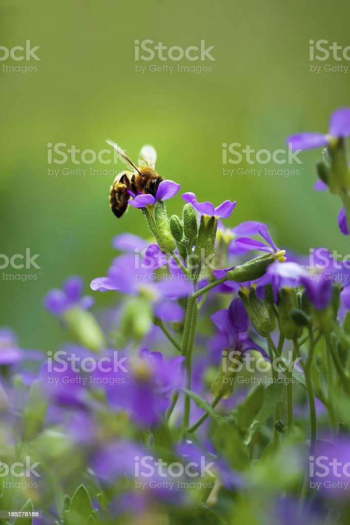 Bee and flowers stock photo