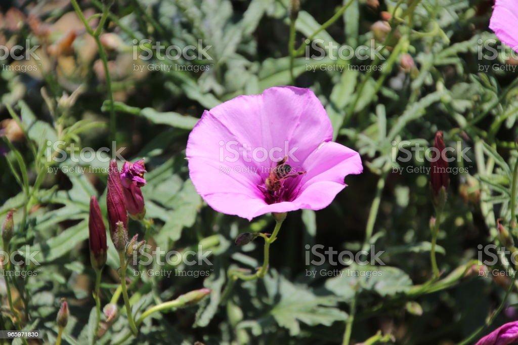 A bee at work Una foto che ritrae un'ape mentre impollina Beauty In Nature Stock Photo