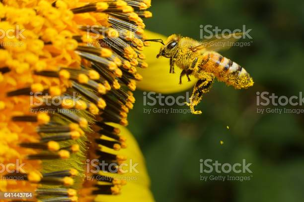 Photo of bee at working