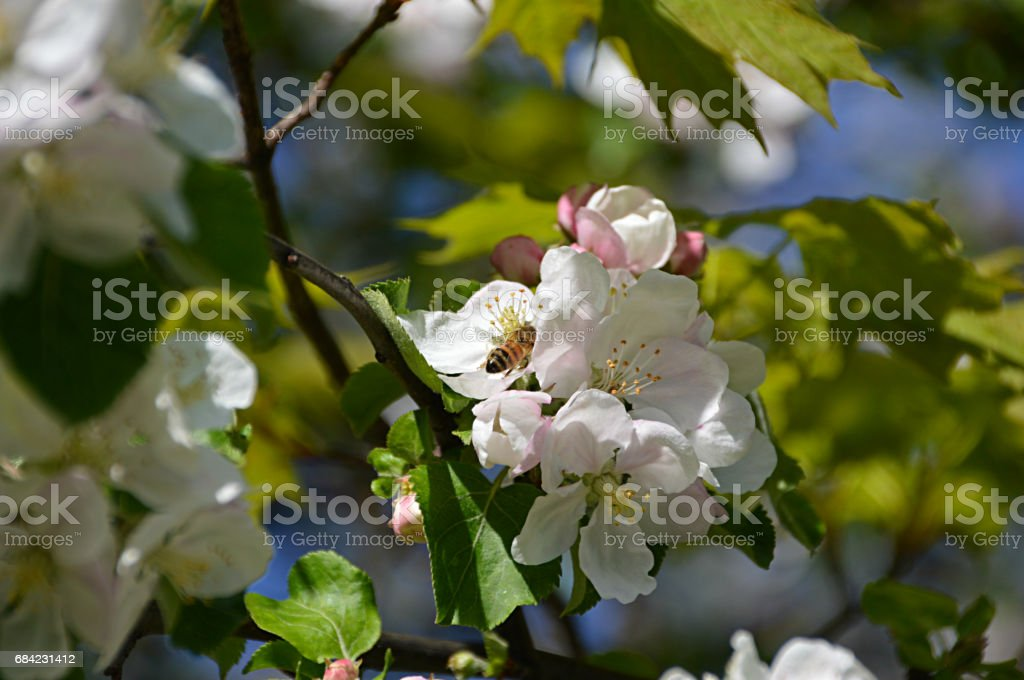 Bee Business royalty-free stock photo
