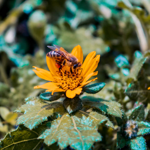 Bee close up stock photo