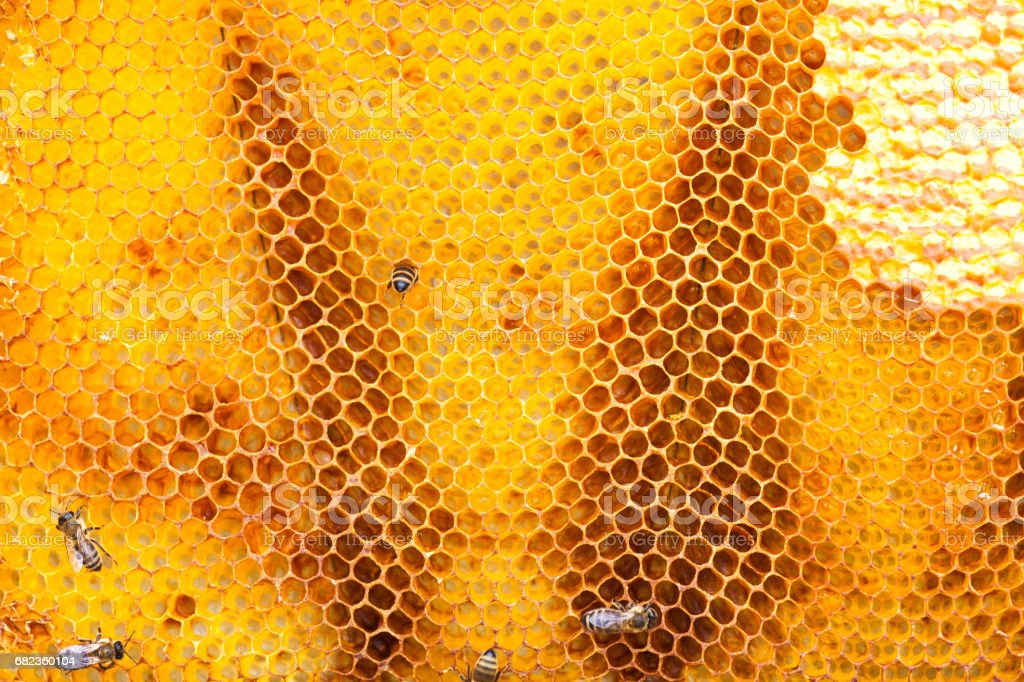 Bee collecting honey in honeycomb royalty free stockfoto