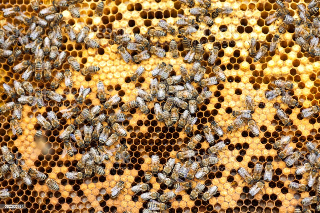 Bee collecting honey in honeycomb foto stock royalty-free
