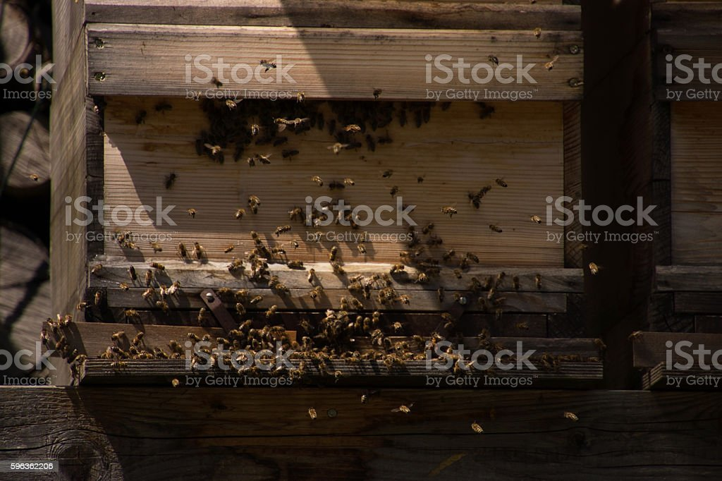 Bee Colony royalty-free stock photo