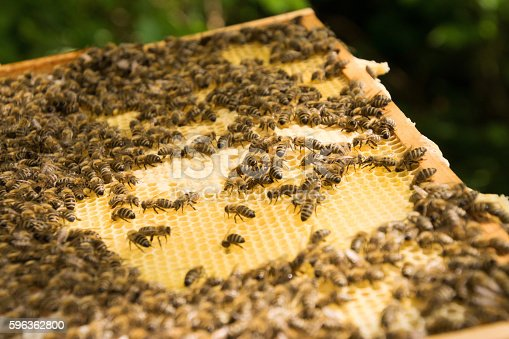 Bee Colony Stock Photo & More Pictures of Animal