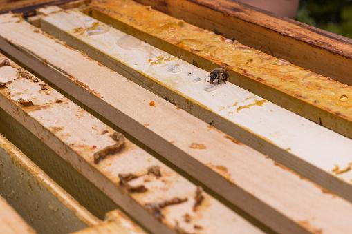 Biene Zuckerwasser