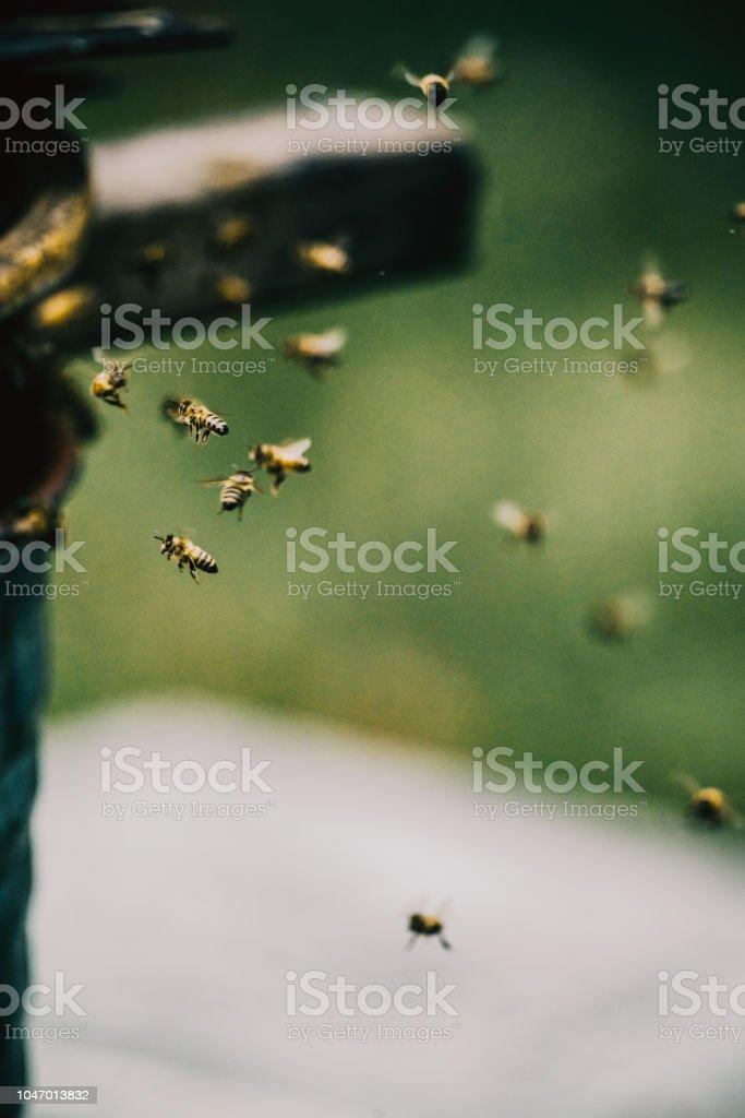 Nourriture pour abeilles - Photo