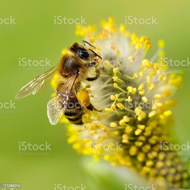 Photo of Bee gathering nectar