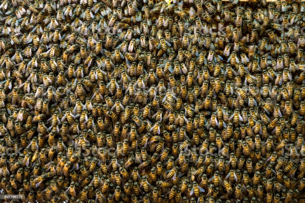 bee hive background stock photo