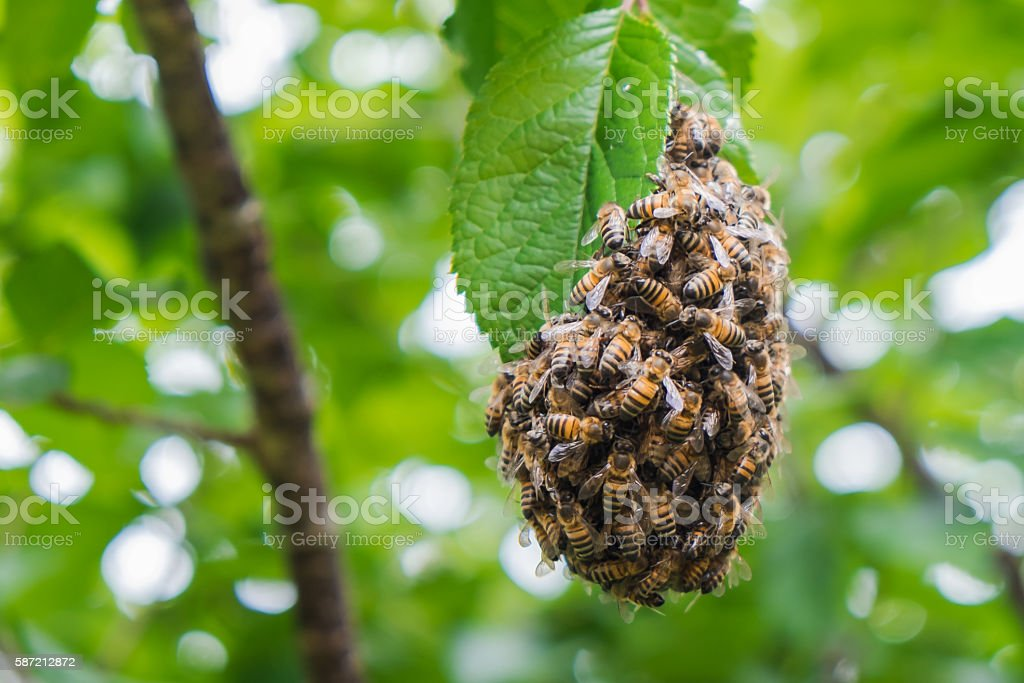 Bee Hive Drop stock photo