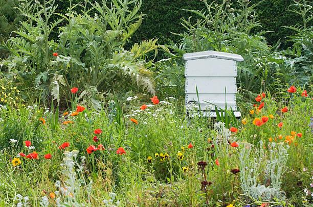Bee hive in domestic garden stock photo