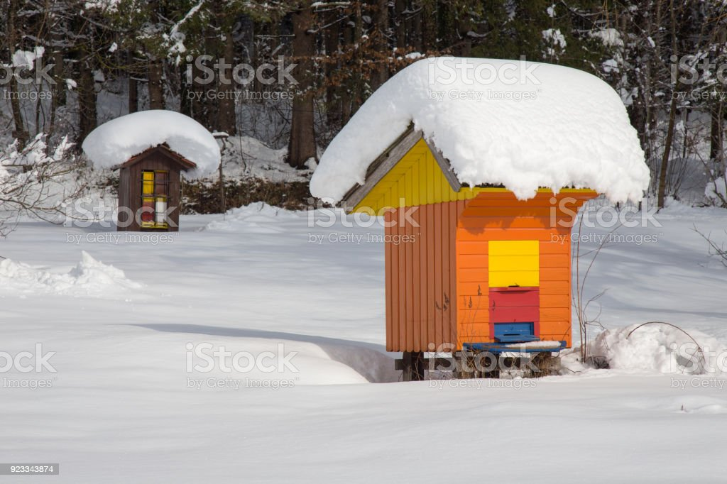 Bee hive in winter - beehive wood house covered with fresh snow, apiculture stock photo