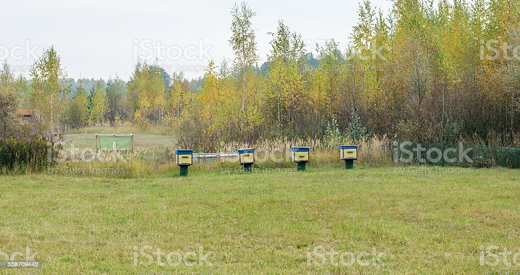 Bee hives are in a clearing in the woods stock photo