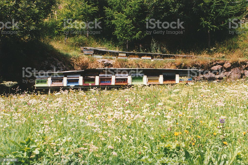 Bee hives in a meadow stock photo