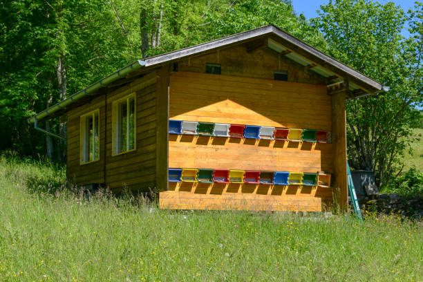 Bienenstöcke auf einem Holzhaus in den Schweizer Alpen – Foto
