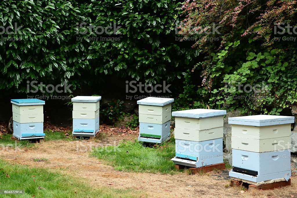 Bee hives stock photo