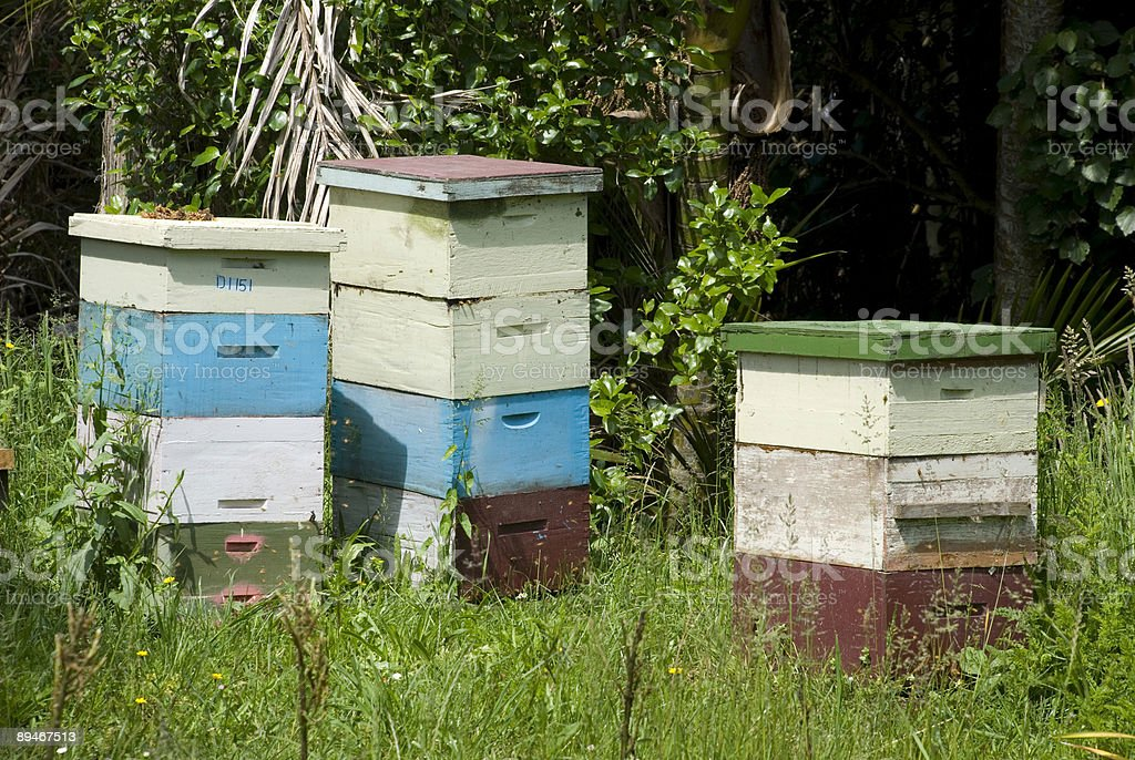 Bee hives royalty-free stock photo