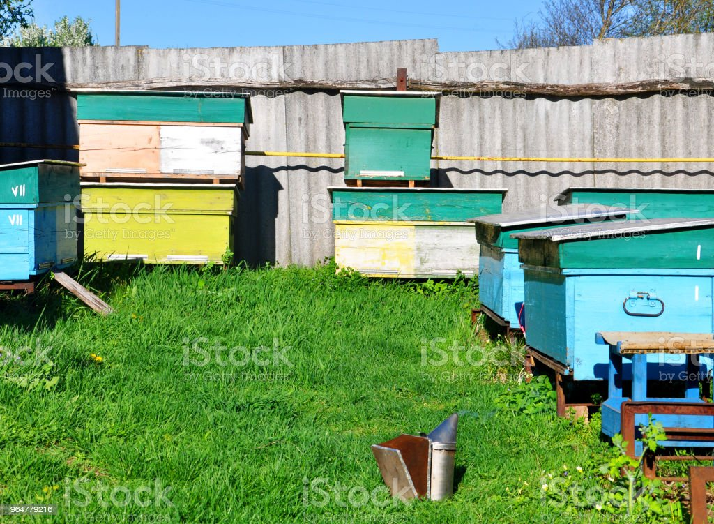 bee hives standing in an apiary on green grass royalty-free stock photo