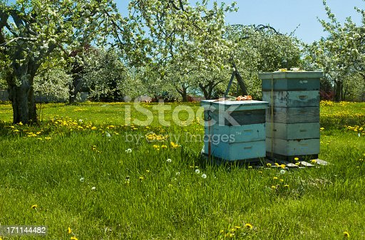 istock Bee hives surrounded by trees on a sunny day 171144482