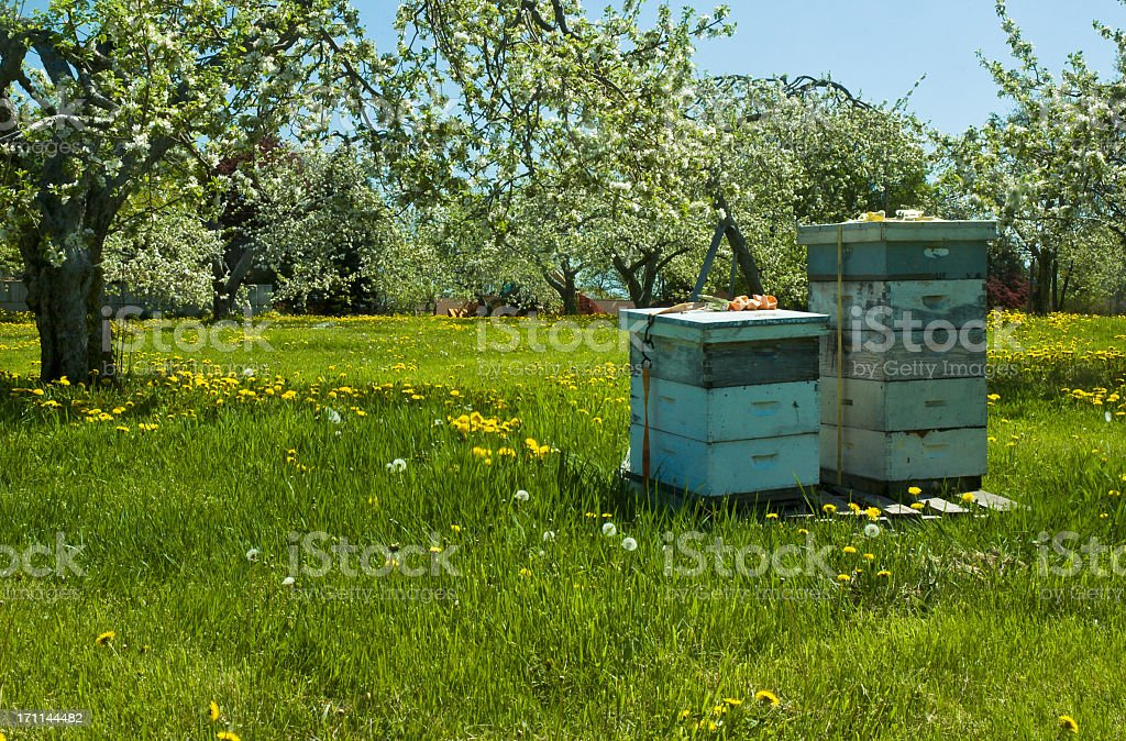 Bee hives surrounded by trees on a sunny day stock photo
