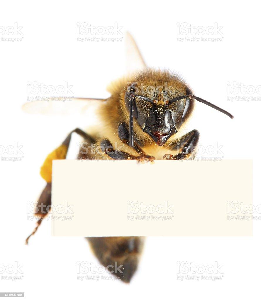 Biene Hält Leere Plakat Stock-Fotografie und mehr Bilder von Apis ...