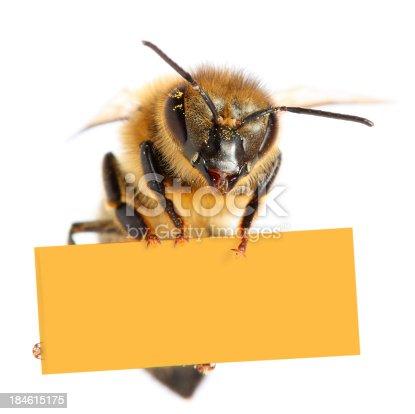 Bee holding blank placard