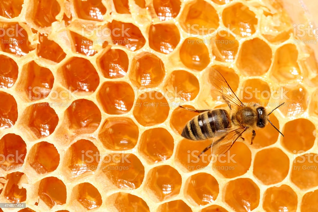 Bee, Honeycomb stock photo