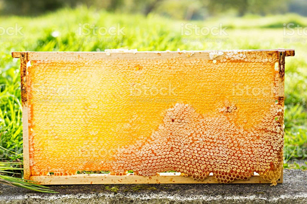 Bee honeycomb stock photo