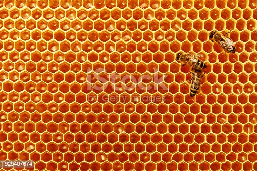 istock Bee honeycombs with honey and bees. Apiculture. 925407674