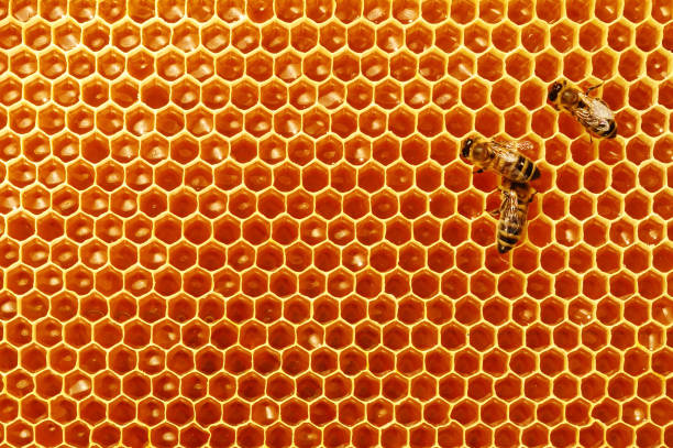 Bee honeycombs with honey and bees. Apiculture. stock photo