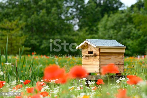 istock Bee House Hive with poppy and wildflower foreground 1162587514