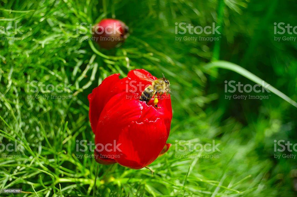 bee in flower - 免版稅動物圖庫照片
