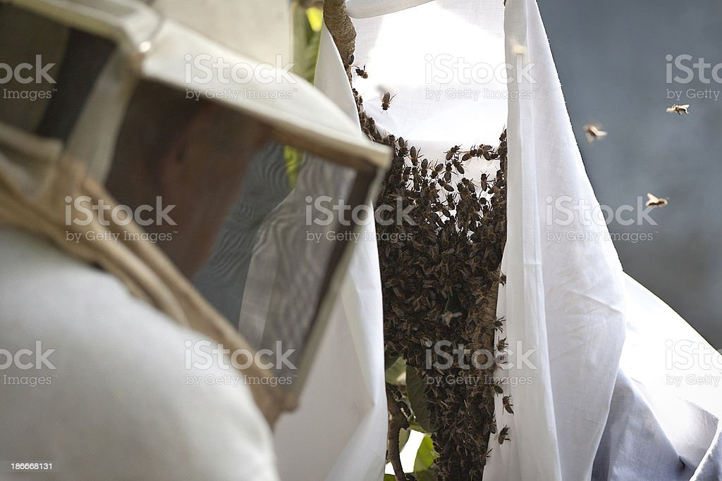 Bee Keeper at Work royalty-free stock photo