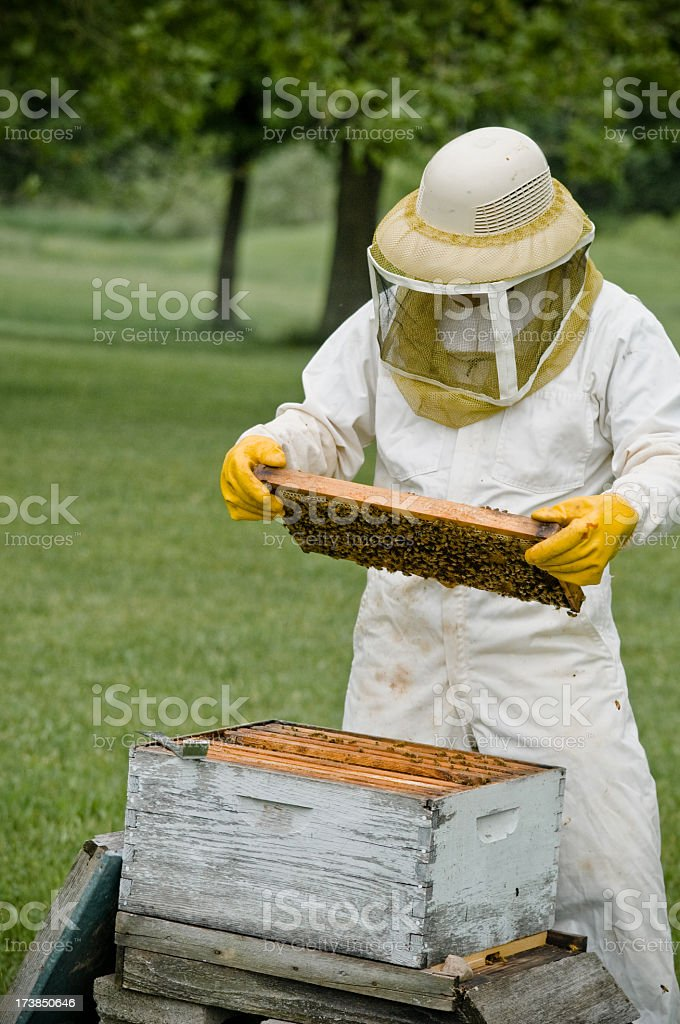 A bee keeper in uniform at work stock photo