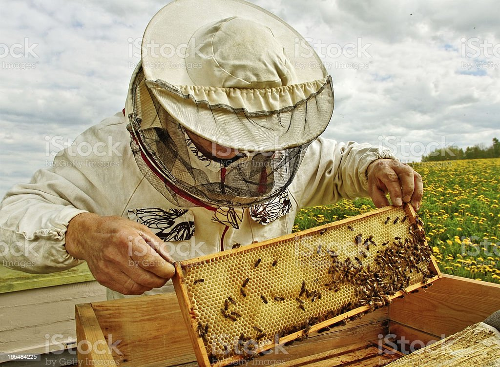 Apiarist. - Photo