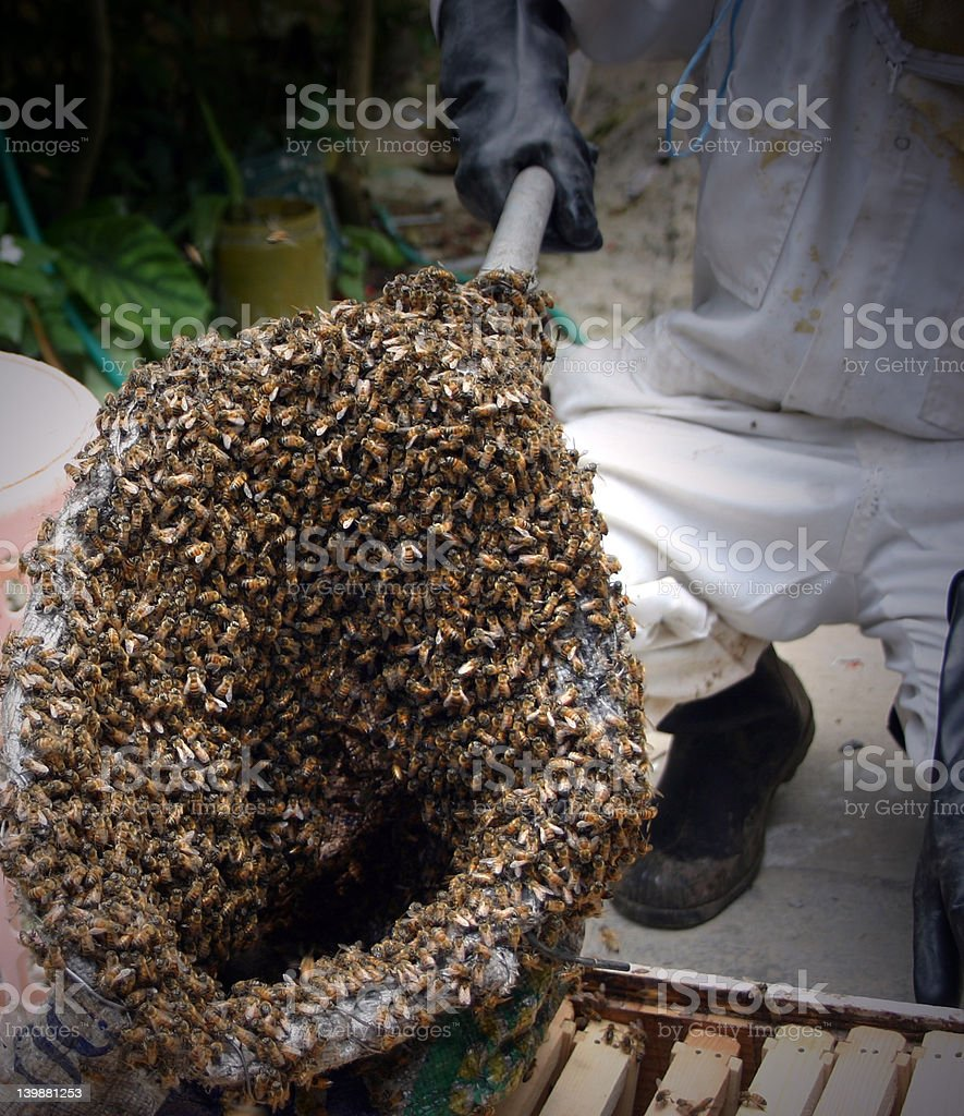 Bee Keeper stock photo