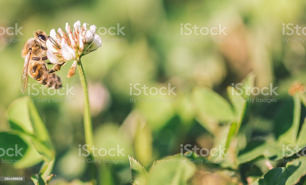 Bee landed on a flower stock photo