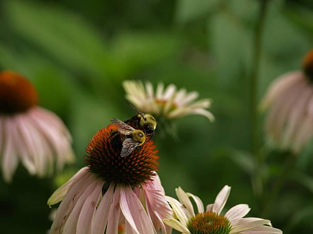 Bee Love stock photo