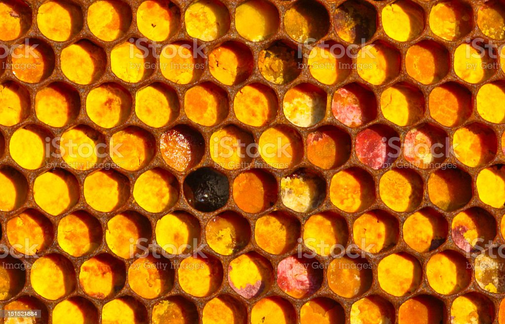Bee mosaic royalty-free stock photo