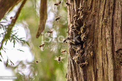 istock Bee Nest 1289292999
